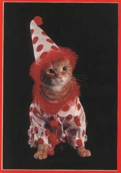 Cat in Clown Suit!